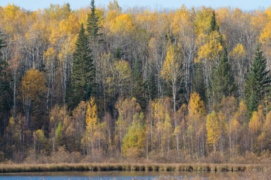 landscape hannin creek